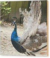 Juvenile Peacock Wood Print
