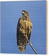 Juvenile Perch Wood Print