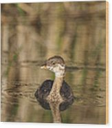Juvenile Pied-billed Grebe Wood Print