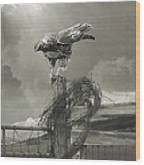 Juvenile Redtail On Post With Barbed Wire Wood Print