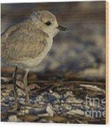 Juvenile Snowy Plover Photo Wood Print