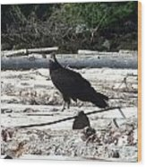 Juvenile Turkey Vulture Wood Print