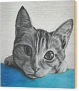 Kahlua Kitty Wood Print