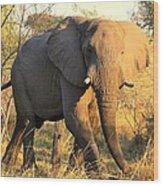 Kalahari Elephant Wood Print