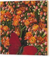 Kalanchoe Plant With Butterfly Wood Print