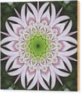 Kaleidoscope Pink Daisy Wood Print