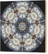 Kaleidoscope Seashells Wood Print by Cathy Lindsey