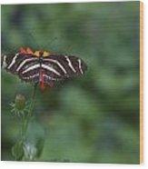 Kanapaha Butterfly I Wood Print by Charles Warren