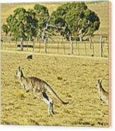 Kangaroo Hop Wood Print