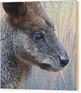 Kangaroo Potrait Wood Print