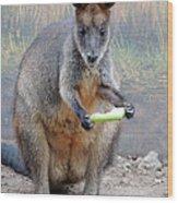 kangaroo Snack Wood Print