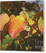 Kansas Fall Leaves Close Up Wood Print