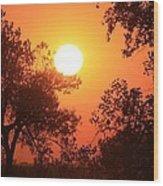 Kansas Golden Sunset With Trees Wood Print by Robert D  Brozek
