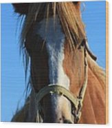 Kansas Horse Potrait Red And White Wood Print