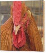Kansas Red Orange Rooster Close Up Wood Print