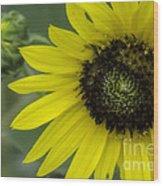 Kansas State Flower Wood Print