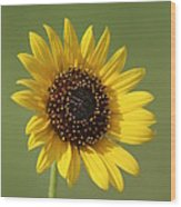 Kansas Wildsunflower With Green Background Wood Print