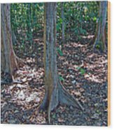 Kapok Trees Along The Trail In Manual Antonio National Preserve-costa Rica Wood Print