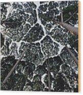 Kapur Trees Showing Crown Shyness Wood Print