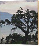 Katrina Survivor Wood Print
