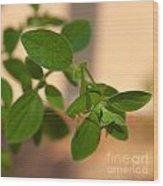 Katydid On Oregano Wood Print
