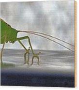 Katydid Reflection Wood Print