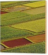 Kauai Taro Fields Wood Print