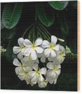Kawela Plumeria Wood Print