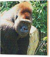 Kc Gorilla-3 Wood Print