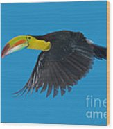 Keel-billed Toucan Wood Print
