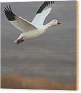 keep flying Goose Wood Print
