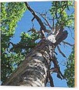 Keep Looking Up Wood Print