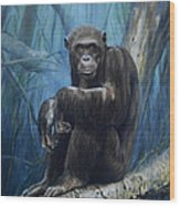 Keeper Of The Congo Wood Print