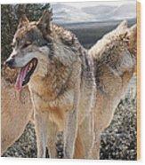 Keeping Watch - Pair Of Wolves Wood Print