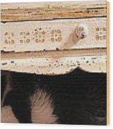Keetz Keetz In Hiding Wood Print