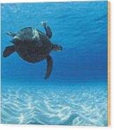 Keiki Turtle Wood Print
