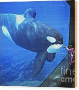 Keiko The Killer Whale Oregon Coast Aquarium Pat Hathaway Photo  1996 Wood Print