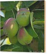 Kelowna Apples I Wood Print