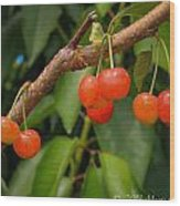 Kelowna Cherries Wood Print