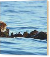Kelp Bed Rondezvous Wood Print