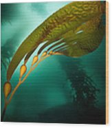 Kelp Forest Wood Print
