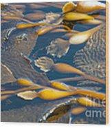 Kelp Haida Gwaii British Columbia Wood Print