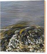 Kelp In Sea Wood Print by IB Photo