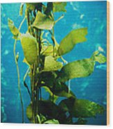 Kelp Two Wood Print