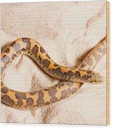 Kenyan Sand Boa Eryx Colubrinus Wood Print