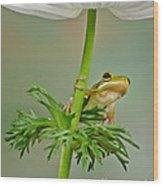 Kermits Canopy Wood Print