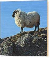 Kerry Hill Sheep Wood Print