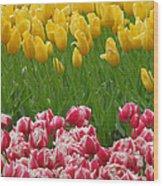 Keukenhof Gardens 37 Wood Print