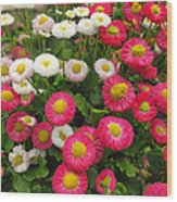 Keukenhof Gardens 39 Wood Print