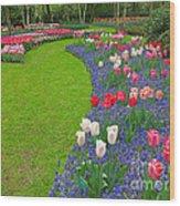 Keukenhof Gardens 52 Wood Print